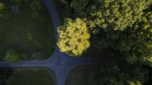 Vue d'aplomb du séquoia wellingtonien géant - Westhoffen